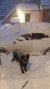 dog, winter, weather